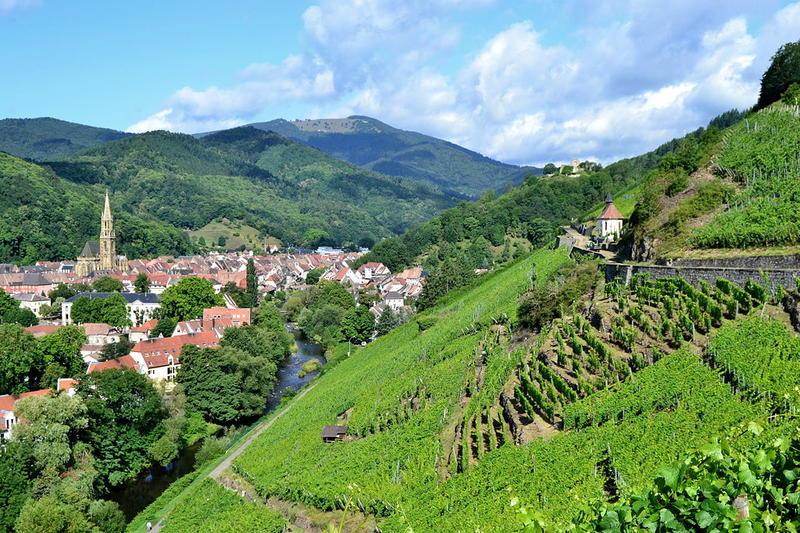 Vue de Thann depuis le vignoble Rangen