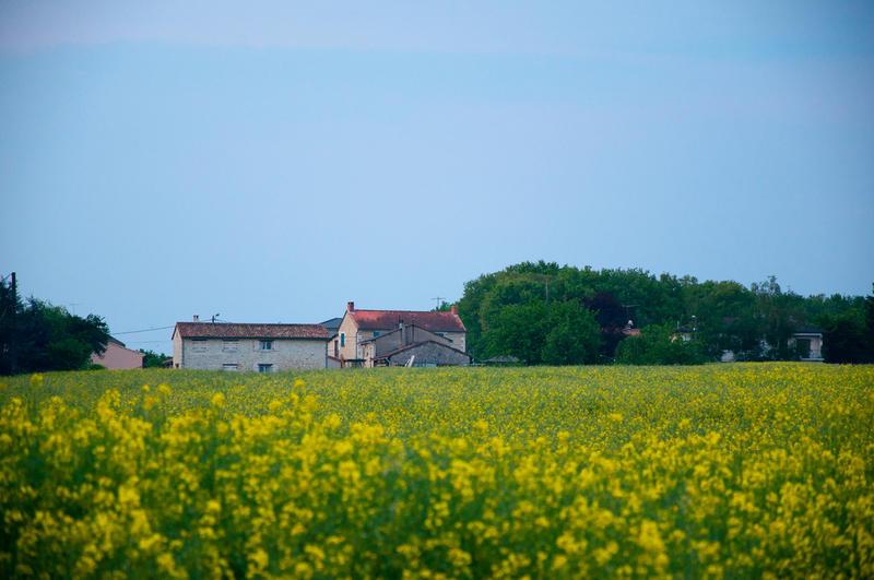 Vue sur les champs à Mignaloux-Beauvoir