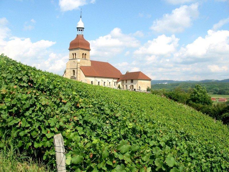 Vue panoramique d'un vignoble du Jura